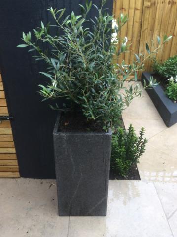 battersea city garden