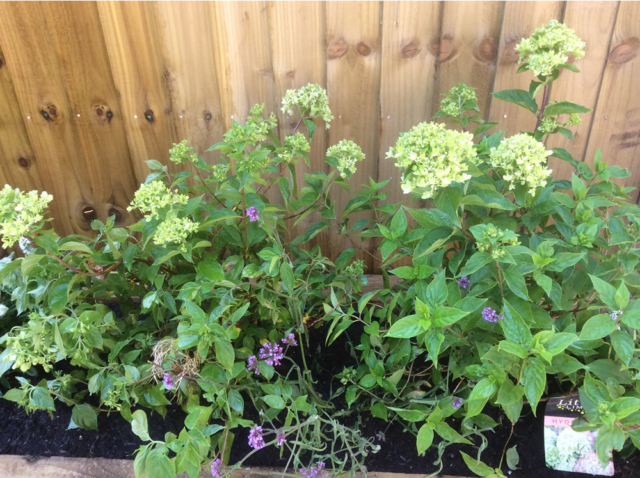 battersea city garden planting
